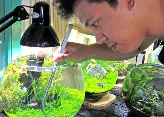 Nusabali.com - produksi-aquascape-mini