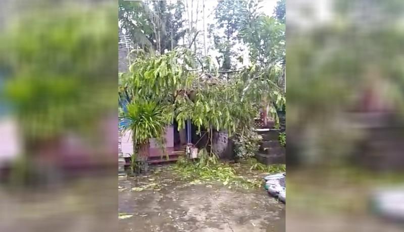 www.nusabali.com-pohon-tumbang-timpa-rumah