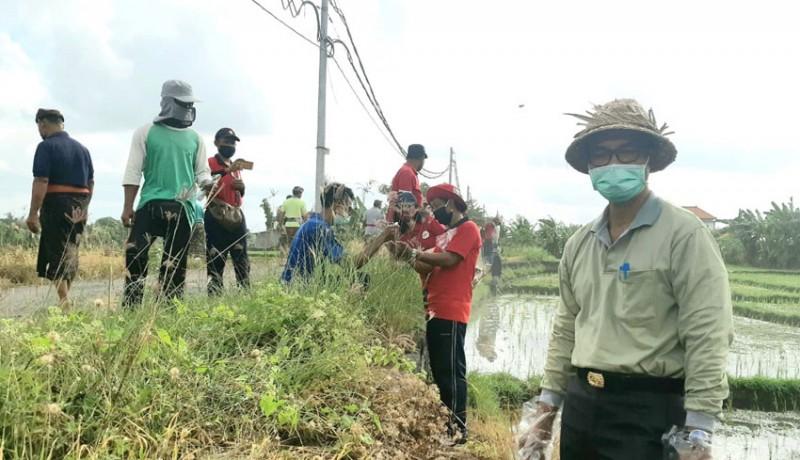 www.nusabali.com-pemkab-badung-bakal-gelar-ngaben-bikul