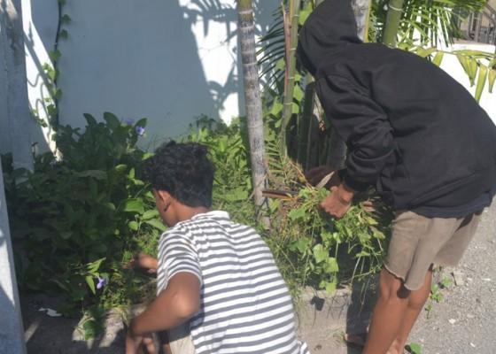 Nusabali.com - 12-warga-disanksi-cabut-rumput