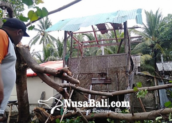 Nusabali.com - puting-beliung-terjang-gerokgak-buleleng-puluhan-rumah-rusak