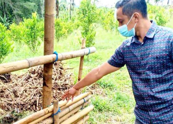 Nusabali.com - sapi-raib-di-kandang-lapor-polisi