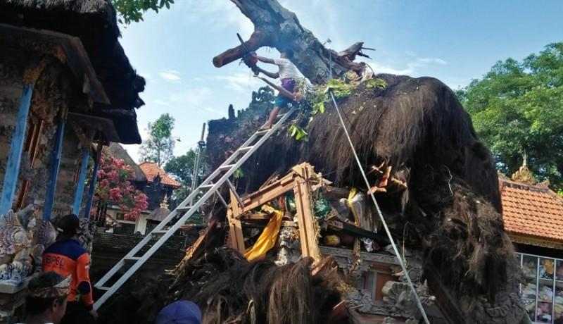 www.nusabali.com-pohon-tumbang-timpa-palinggih-pura-kahyangan-tiga-desa-adat-pikah
