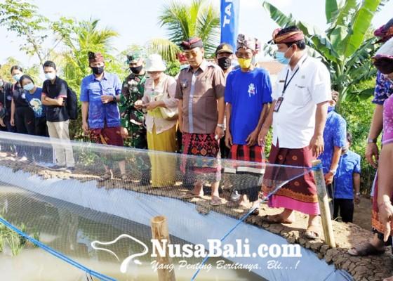 Nusabali.com - mina-padi-dikembangkan-di-subak-mandul-desa-panji
