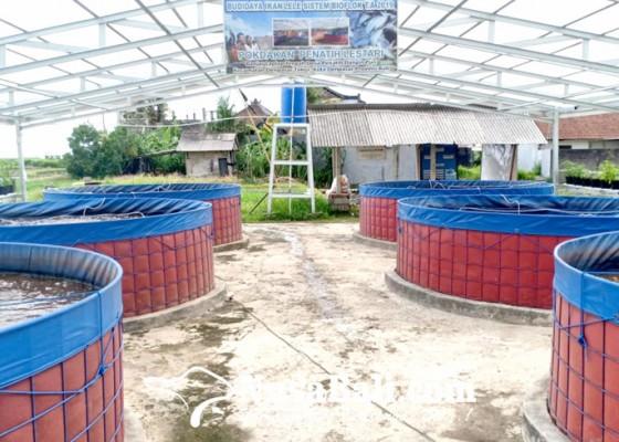 Nusabali.com - sistem-yumina-bumina-jadi-solusi-beternak-di-perkotaan