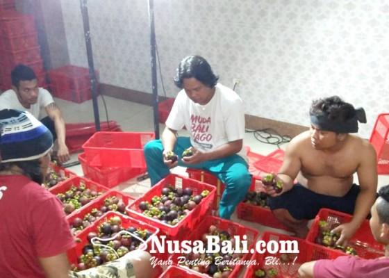 Nusabali.com - china-desak-bali-segera-ekspor-manggis