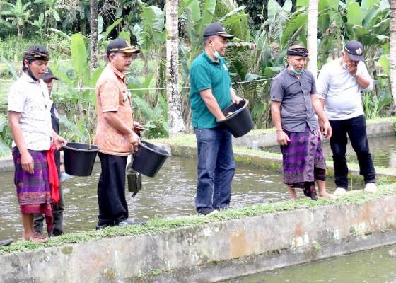 Nusabali.com - pokdakan-dapat-bantuan-bibit-dan-pakan-ikan