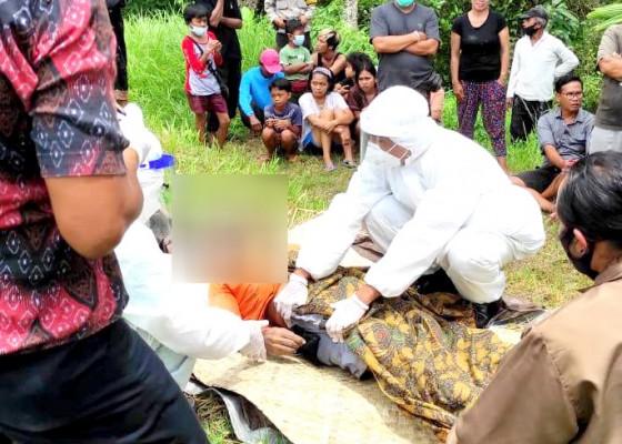 Nusabali.com - lelah-petani-meninggal-saat-bajak-sawah