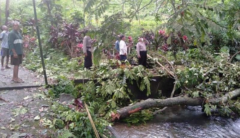 www.nusabali.com-siswi-smk-tewas-tertimpa-pohon-saat-mandi