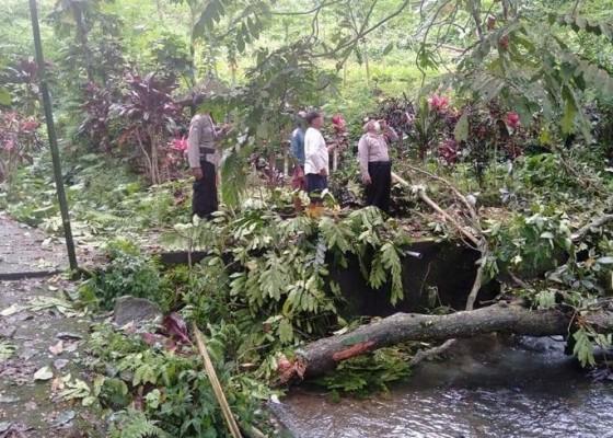 Nusabali.com - siswi-smk-tewas-tertimpa-pohon-saat-mandi