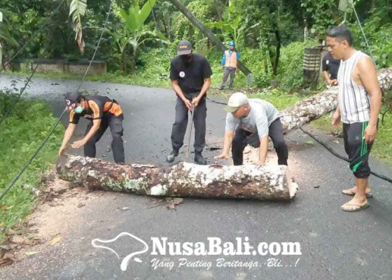 Nusabali.com - pohon-tumbang-truk-kesulitan-melintas