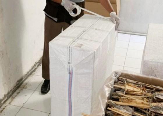 Nusabali.com - ekspor-tokek-kering-ke-china-tembus-29-ton