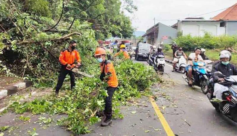 www.nusabali.com-sehari-terjadi-tiga-pohon-tumbang-ada-timpa-kabel-listrik