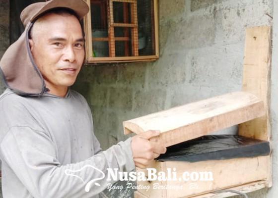 Nusabali.com - budidaya-madu-kele-kele