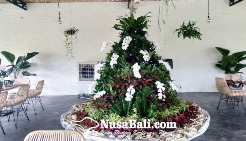 www.nusabali.com-keren-beberapa-tanaman-hias-dirangkai-jadi-pohon-natal-setinggi-3-meter