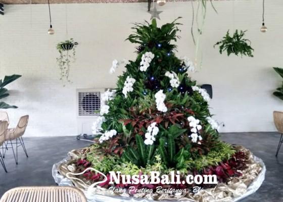Nusabali.com - keren-beberapa-tanaman-hias-dirangkai-jadi-pohon-natal-setinggi-3-meter