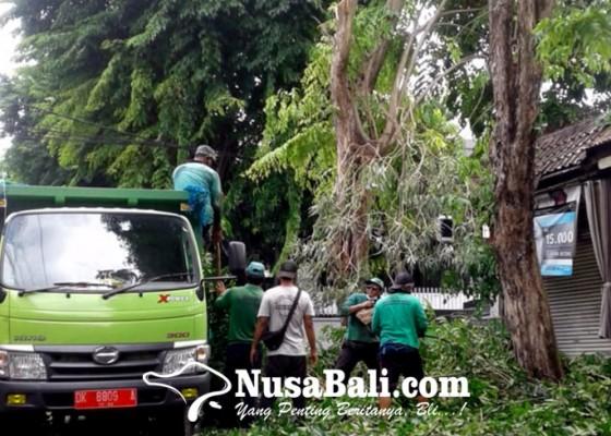 Nusabali.com - musim-hujan-dlhk-intensifkan-perompesan-pohon-perindang