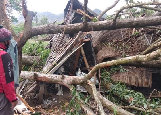 Nusabali.com - mobil-ringsek-tertimpa-pohon