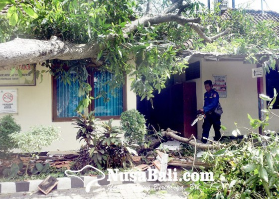 Nusabali.com - perpustakaan-sdn-10-sumerta-ditimpa-pohon