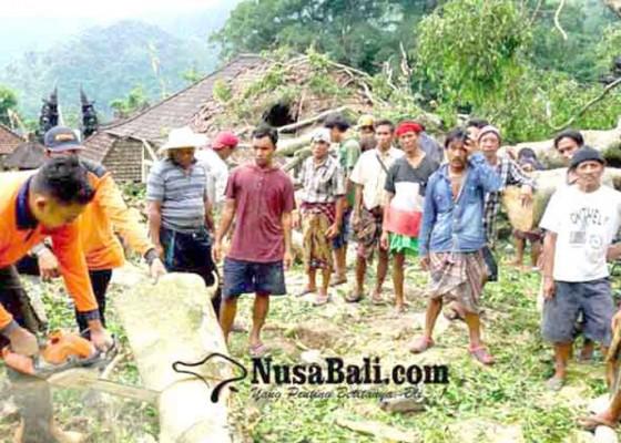 Nusabali.com - pohon-bertumbangan-bpbd-minim-alat