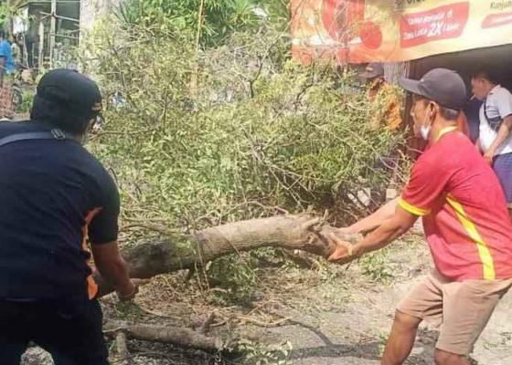 Nusabali.com - dua-pengendara-motor-tertimpa-pohon-satu-luka-berat
