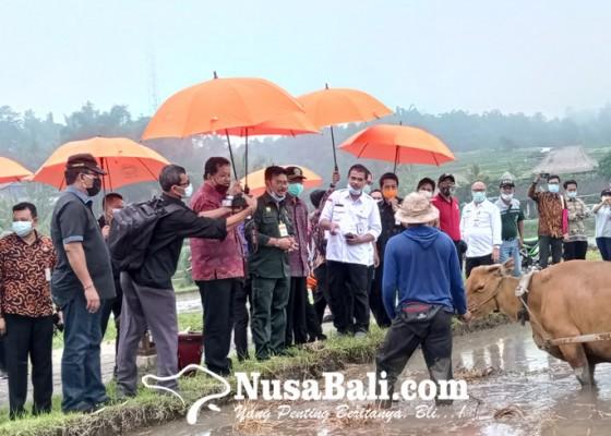 Nusabali.com - menteri-pertanian-minta-kembangkan-program-mina-padi-di-jatiluwih