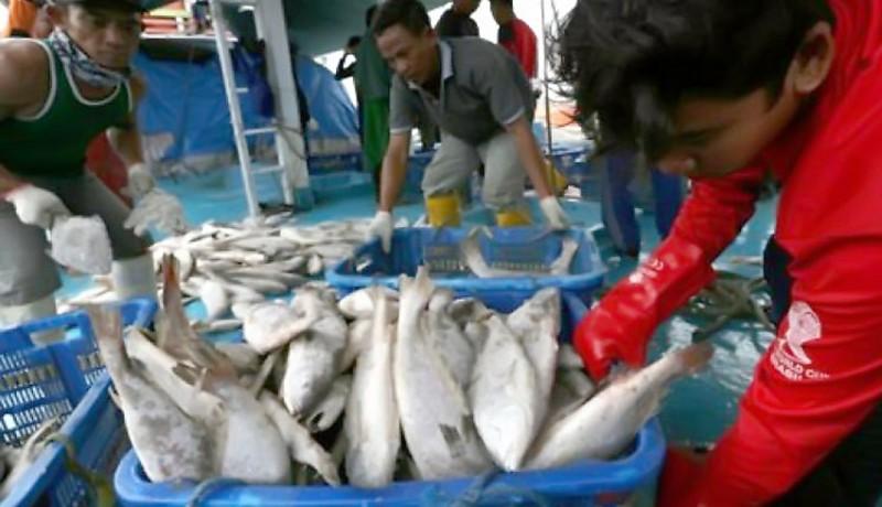 www.nusabali.com-kkp-diminta-fokus-kembangkan-ikan-kaleng