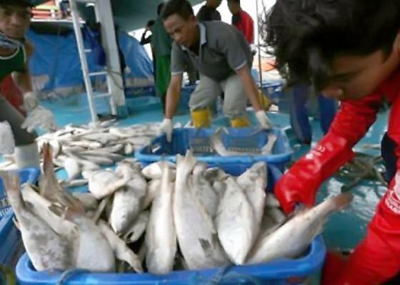 Nusabali.com - kkp-diminta-fokus-kembangkan-ikan-kaleng