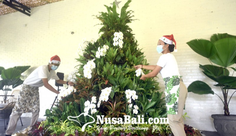 www.nusabali.com-perayaan-di-tengah-pandemi-300-tanaman-hias-jadi-bahan-pohon-natal