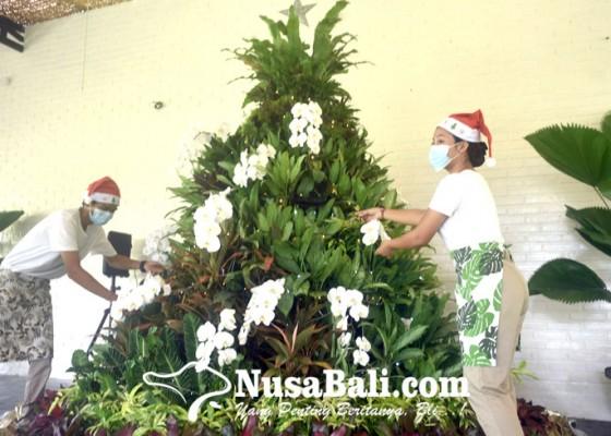 Nusabali.com - perayaan-di-tengah-pandemi-300-tanaman-hias-jadi-bahan-pohon-natal