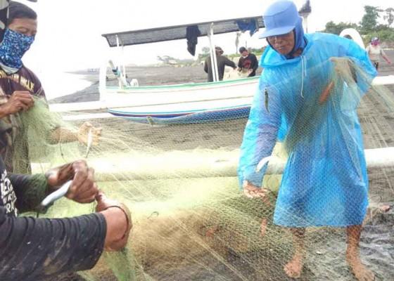 Nusabali.com - ikan-tangkapan-nelayan-melimpah