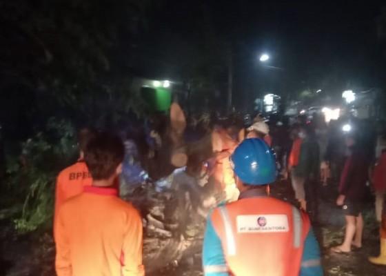 Nusabali.com - ditimpa-pohon-roboh-satu-keluarga-terluka