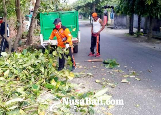 Nusabali.com - sumerta-kelod-gencarkan-perompesan-pohon