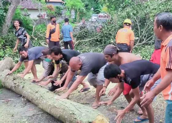 Nusabali.com - pohon-nangka-tumbang-timpa-rumah
