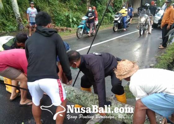 Nusabali.com - pohon-kelapa-tumbang-tutup-jalan-raya