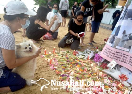 Nusabali.com - 7-anjing-mati-diduga-diracun-para-feeders-gelar-doa-bersama