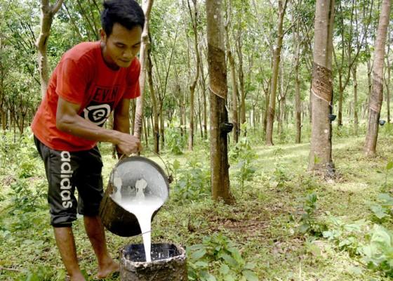 Nusabali.com - peningkatan-ekspor-komoditas-perkebunan