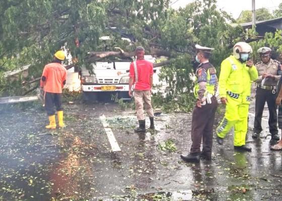 Nusabali.com - pohon-tumbang-timpa-truk-sopir-selamat