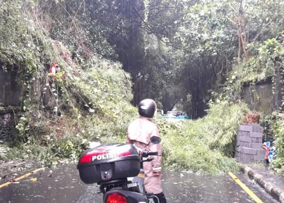 Nusabali.com - rumpun-bambu-tumbang-halangi-jalan-tjampuhan-ubud