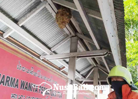 Nusabali.com - damkar-bersihkan-sarang-tawon