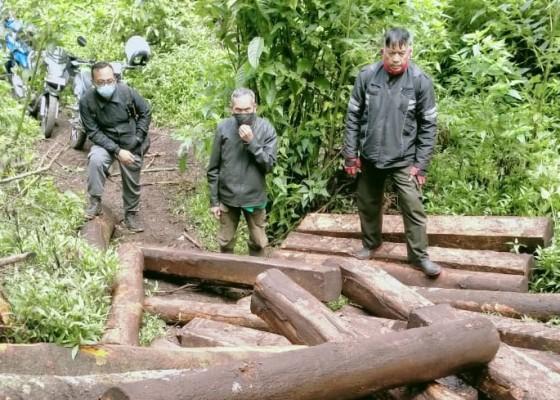 Nusabali.com - petugas-amankan-terduga-pencuri-kayu-hutan