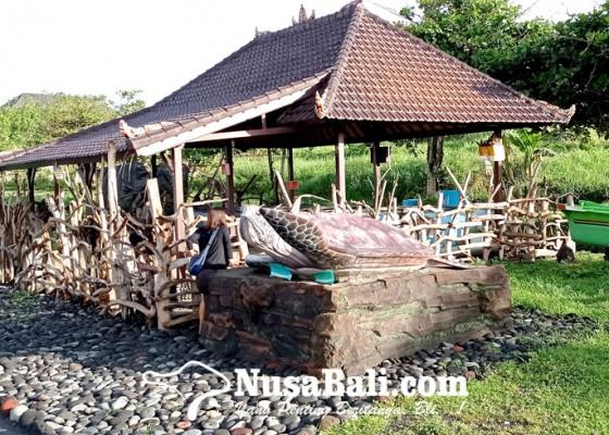 Nusabali.com - telur-kerap-dimakan-anjing-yeh-gangga-bangun-konservasi-penyu