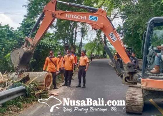 Nusabali.com - evakuasi-pohon-tumbang-bpbd-pinjam-ekskavator