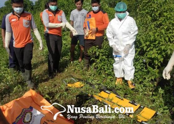 Nusabali.com - pancing-nyangkut-di-kabel-tegangan-tinggi-pemancing-tewas