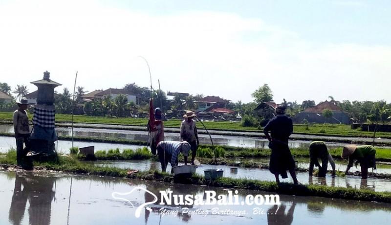 www.nusabali.com-wujudkan-lumbung-pangan-daerah-buleleng-petakan-subak-produktif-dan-hilirisasi-pertanian