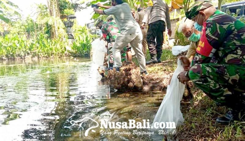 www.nusabali.com-ribuan-benih-nila-ditebar-di-desa-tukadmungga