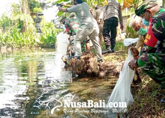 Nusabali.com - ribuan-benih-nila-ditebar-di-desa-tukadmungga