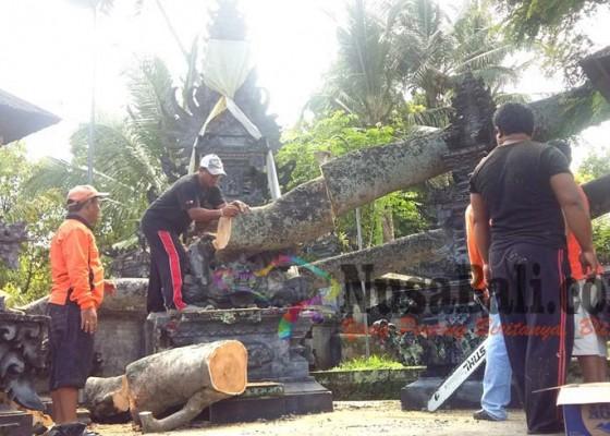 Nusabali.com - krama-percaya-sebagai-tempat-nunas-tamba