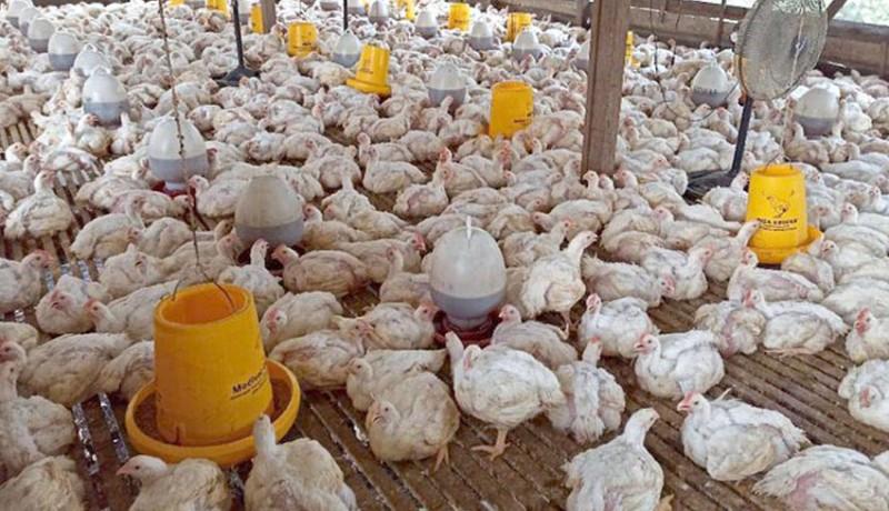 www.nusabali.com-peternak-minta-pemerintah-batasi-supply