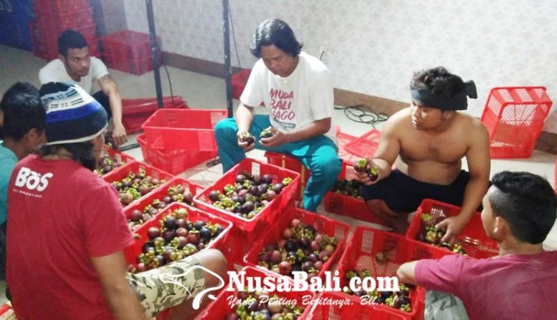 www.nusabali.com-bali-gagal-panen-manggis-dan-durian